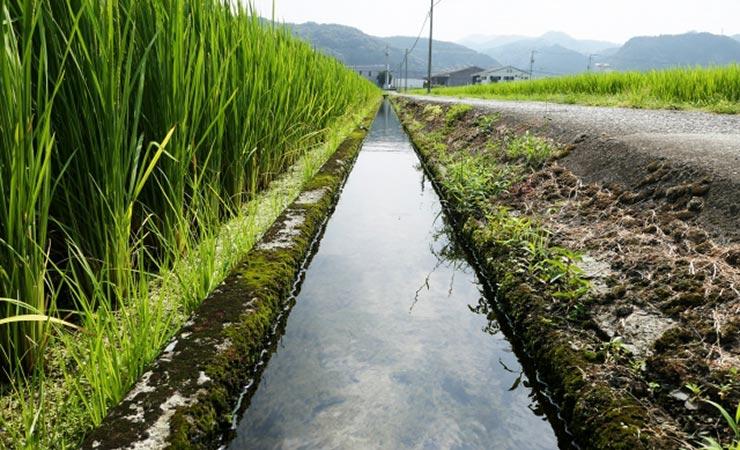 田んぼと田んぼの間に用水路がある