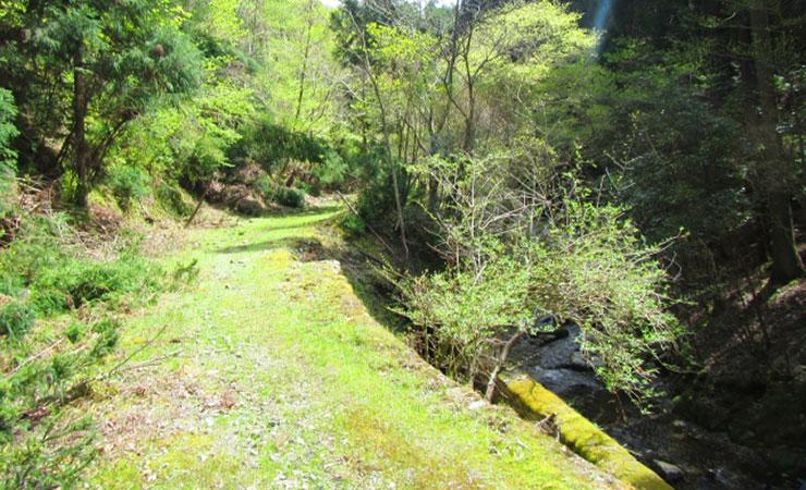 舗装していない林道を車で走行するのは大変!